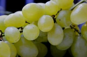 grape, grapes handle, vine
