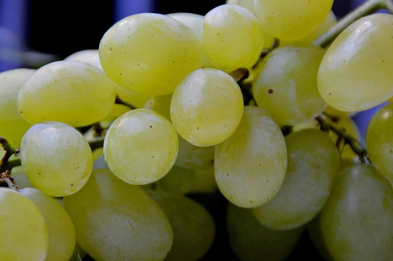 grape, grapes handle, vine