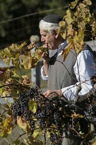 Kosher vineyard